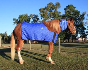 Horse Cooling